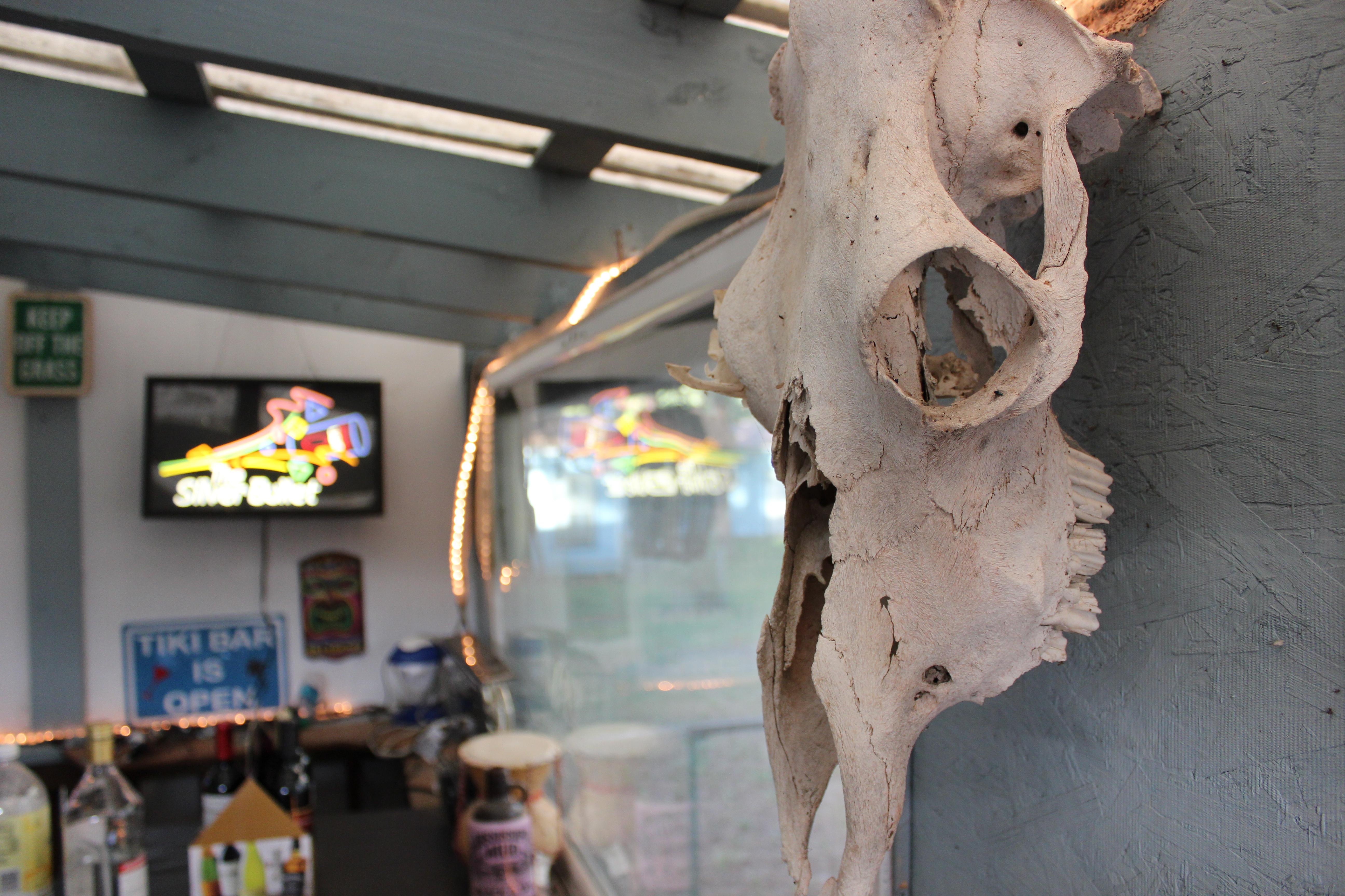 Photograph of an animal skull
